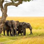 Ваши фото: путешествие по Кении