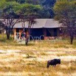 Lemala Ndutu Tented Camp Serengeti 2*