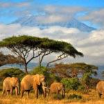 Африка !!!!??Танзания остров Занзибар — там Вы еще не бывали !!!?????